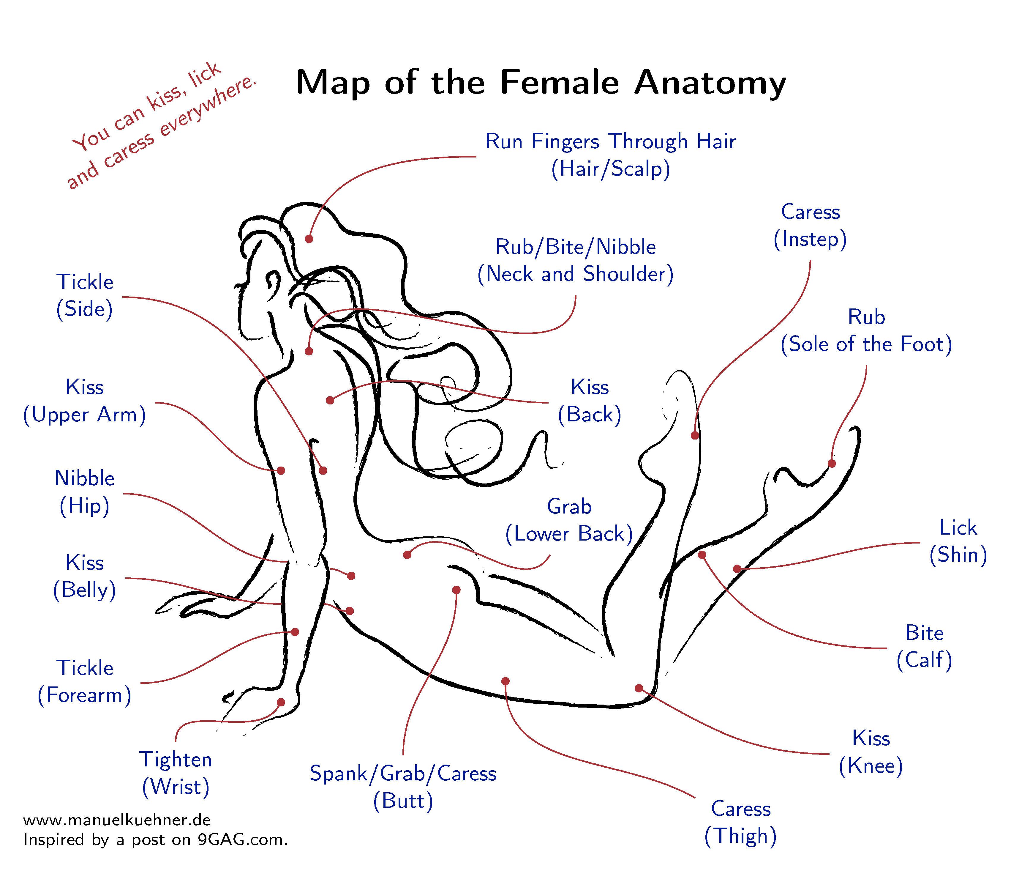 Weibliche Anatomie (Female Anatomy) – Manuel Kuehner