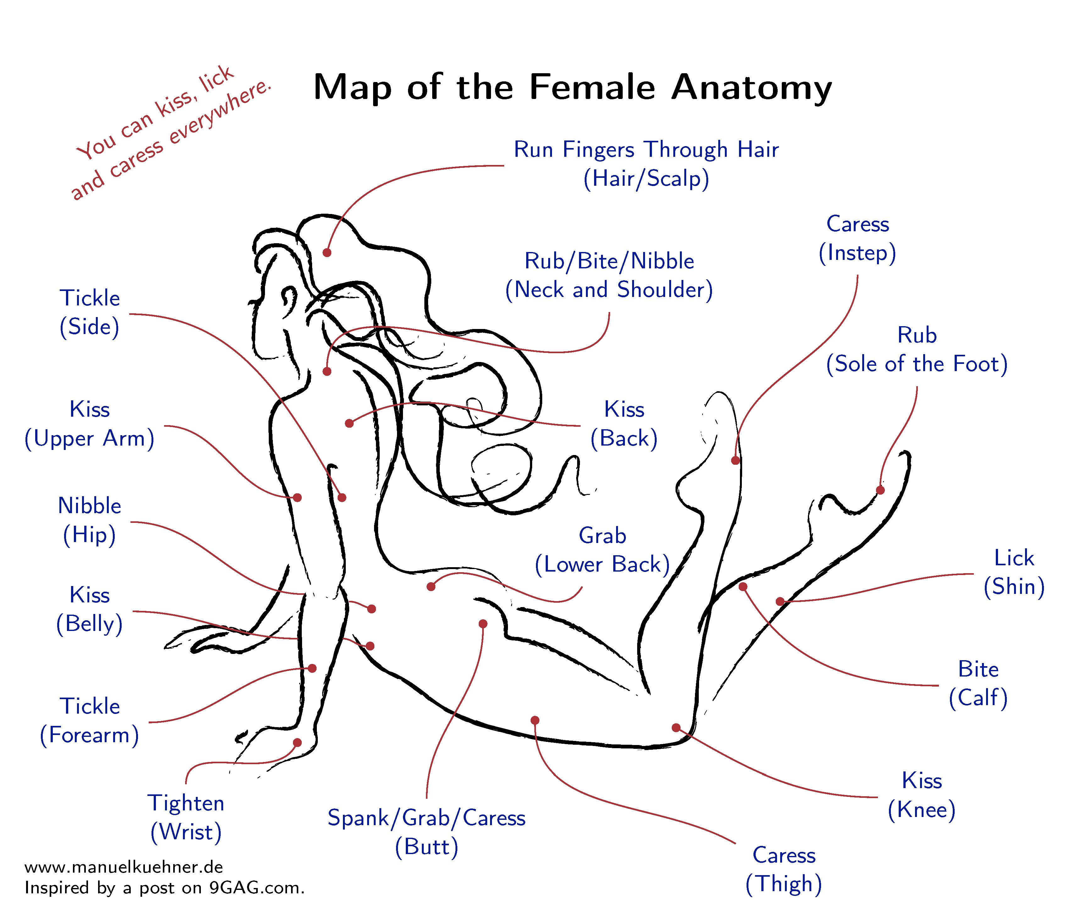femaleanatomy_eng